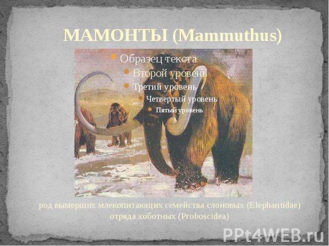 МАМОНТЫ (Mammuthus) род вымерших млекопитающих семейства слоновых (Elephantidae) отряда хоботных (Proboscidea)
