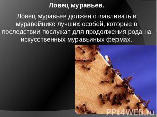 Ловец муравьев. Ловец муравьев должен отлавливать в муравейнике лучших особей, к