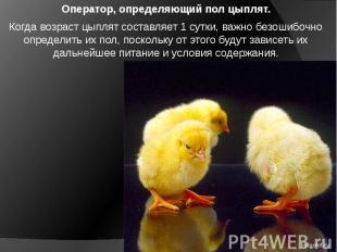 Оператор, определяющий пол цыплят. Когда возраст цыплят составляет 1 сутки, важн