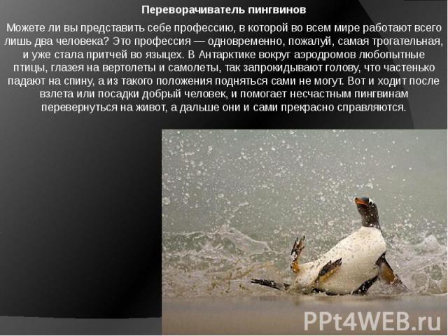 Переворачиватель пингвинов Можете ли вы представить себе профессию, в которой во всем мире работают всего лишь два человека? Это профессия — одновременно, пожалуй, самая трогательная, и уже стала притчей во языцех. В Антарктике вокруг аэродромов люб…