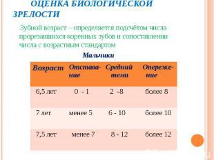 Зубной возраст – определяется подсчётом числа прорезавшихся коренных зубов и соп