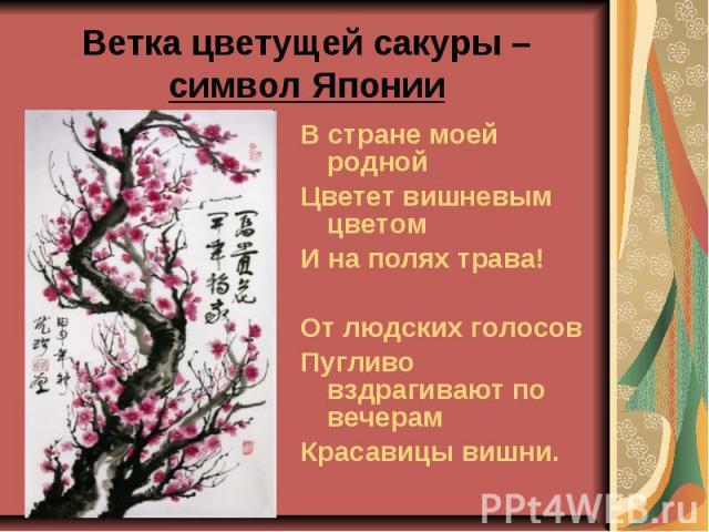 Ветка цветущей сакуры – символ Японии В стране моей родной Цветет вишневым цветом И на полях трава! От людских голосов Пугливо вздрагивают по вечерам Красавицы вишни.