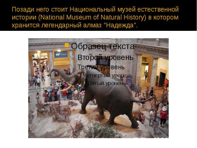 """Позади него стоит Национальный музей естественной истории (National Museum of Natural History) в котором хранится легендарный алмаз """"Надежда""""."""