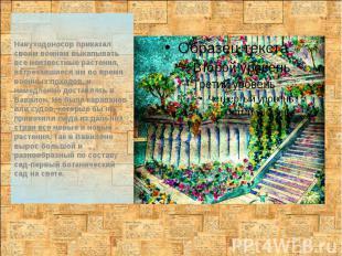 Навуходоносор приказал своим воинам выкапывать все неизвестные растения, встреча