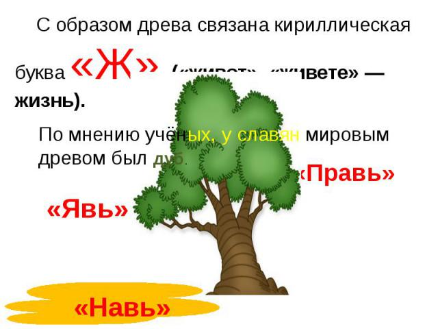 С образом древа связана кириллическая буква «Ж» («живот», «живете» — жизнь).