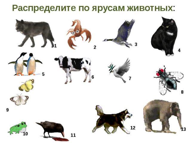 Распределите по ярусам животных: