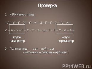 и-РНК имеет вид: и-РНК имеет вид: – А – У – Г – У – У – А – Ц – Г – Г – У – А –