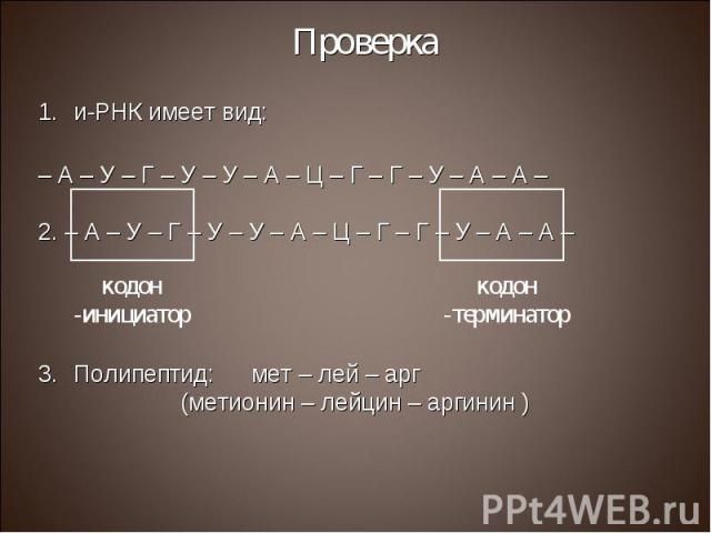 и-РНК имеет вид: и-РНК имеет вид: – А – У – Г – У – У – А – Ц – Г – Г – У – А – А – 2. – А – У – Г – У – У – А – Ц – Г – Г – У – А – А – Полипептид: мет – лей – арг (метионин – лейцин – аргинин )