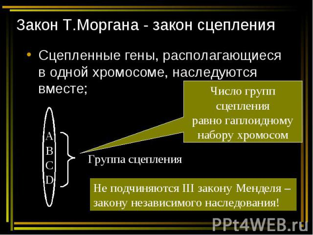 Закон Т.Моргана - закон сцепления Сцепленные гены, располагающиеся в одной хромосоме, наследуются вместе;