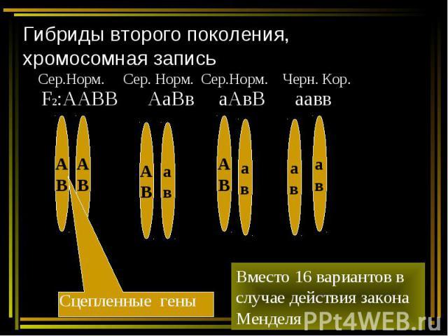 Гибриды второго поколения, хромосомная запись