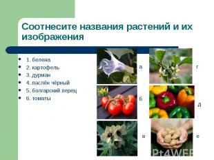 1. белена 1. белена 2. картофель 3. дурман 4. паслён чёрный 5. болгарский перец