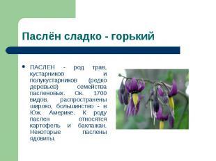 ПАСЛЕН - род трав, кустарников и полукустарников (редко деревьев) семейства пасл