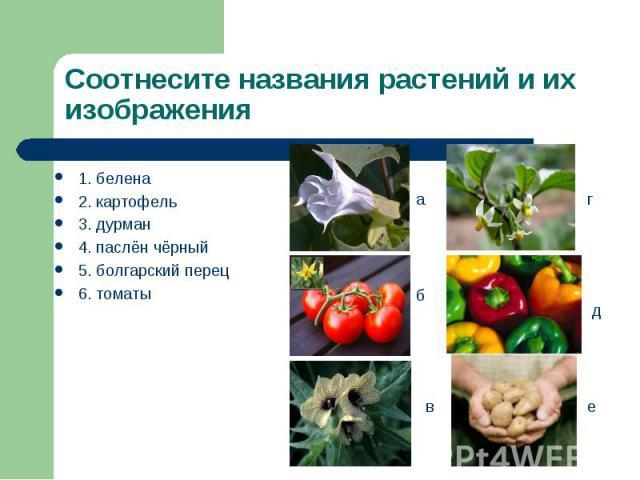 1. белена 1. белена 2. картофель 3. дурман 4. паслён чёрный 5. болгарский перец 6. томаты
