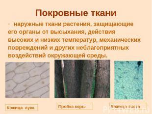 Покровные ткани наружные ткани растения, защищающие его органы от высыхания, дей
