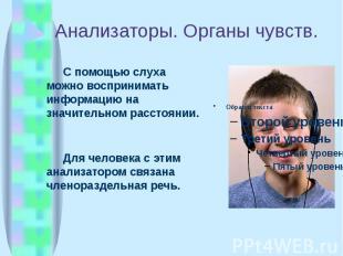 Анализаторы. Органы чувств. С помощью слуха можно воспринимать информацию на зна