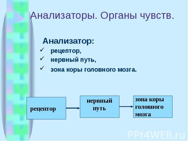 Анализаторы. Органы чувств. Анализатор: рецептор, нервный путь, зона коры головного мозга.