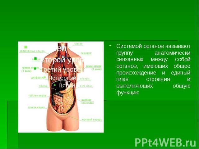 Системой органов называют группу анатомически связанных между собой органов, имеющих общее происхождение и единый план строения и выполняющих общую функцию Системой органов называют группу анатомически связанных между собой органов, имеющих общее пр…