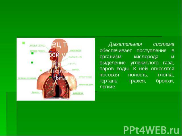 Дыхательная система обеспечивает поступление в организм кислорода и выделение углекислого газа, паров воды. К ней относятся носовая полость, глотка, гортань, трахея, бронхи, легкие. Дыхательная система обеспечивает поступление в организм кислорода и…