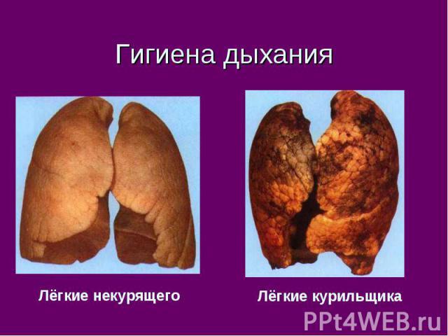 Гигиена дыхания