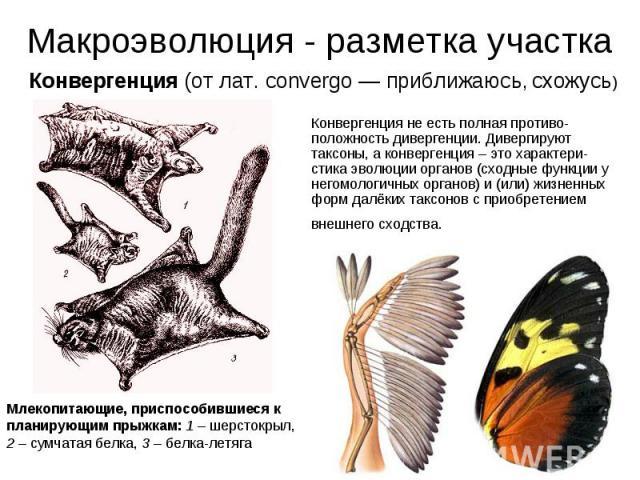 Конвергенция не есть полная противо-положность дивергенции. Дивергируют таксоны, а конвергенция – это характери-стика эволюции органов (сходные функции у негомологичных органов) и (или) жизненных форм далёких таксонов с приобретением внешнего сходст…