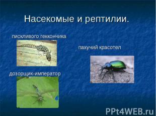 Насекомые и рептилии. пискливого геккончика