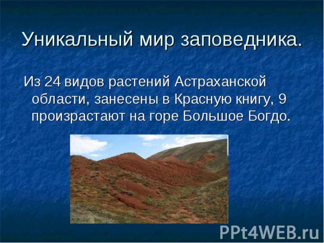 Уникальный мир заповедника. Из 24 видов растений Астраханской области, занесены в Красную книгу, 9 произрастают на горе Большое Богдо.