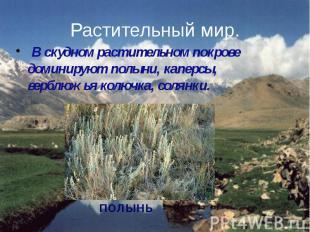 Растительный мир. В скудном растительном покрове доминируют полыни, каперсы, вер