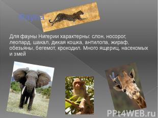 Фауна Для фауны Нигерии характерны: слон, носорог, леопард, шакал, дикая кошка,
