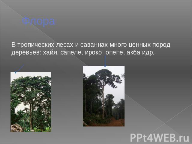 Флора В тропических лесах и саваннах много ценных пород деревьев: хайя, сапеле, ироко, опепе, акба идр.