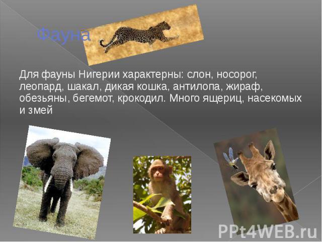 Фауна Для фауны Нигерии характерны: слон, носорог, леопард, шакал, дикая кошка, антилопа, жираф, обезьяны, бегемот, крокодил. Много ящериц, насекомых и змей