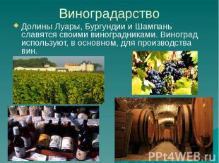 Виноградарство Долины Луары, Бургундии и Шампань славятся своими виноградниками.