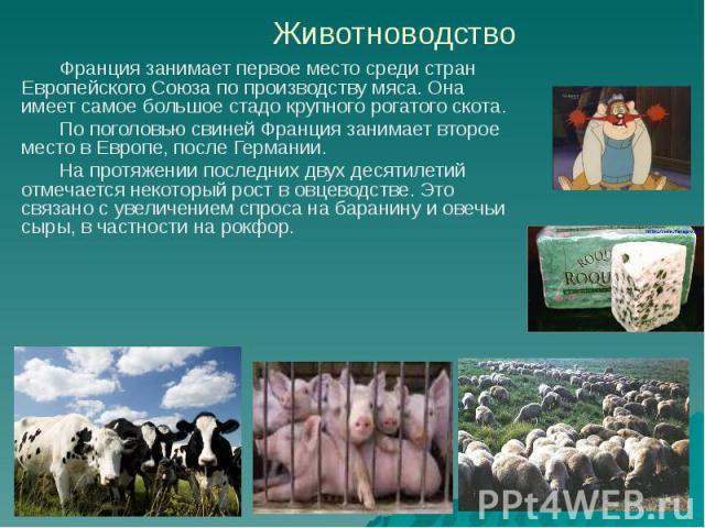 Животноводство Франция занимает первое место среди стран Европейского Союза по производству мяса. Она имеет самое большое стадо крупного рогатого скота. По поголовью свиней Франция занимает второе место в Европе, после Германии. На протяжении послед…