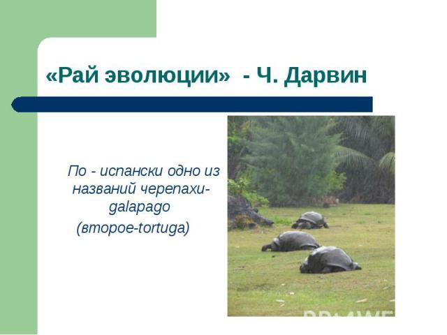 По - испански одно из названий черепахи-galapago (второе-tortuga)