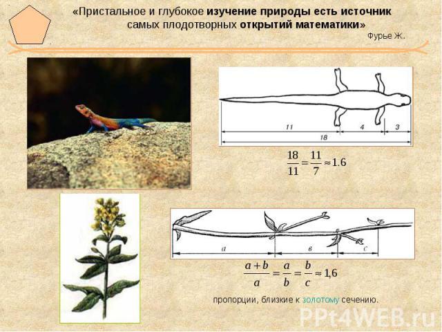 «Пристальное и глубокое изучение природы есть источник самых плодотворных открытий математики» Фурье Ж.
