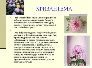 ХРИЗАНТЕМА На современном языке цветов хризантема - эмблема печали, символ осени
