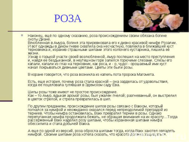 РОЗА Наконец, ещё по одному сказанию, роза происхождением своим обязана богине охоты Диане. Влюбленная в Амура, богиня эта приревновала его к дивно красивой нимфе Розалии. И вот однажды в диком гневе схватила она несчастную, повлекла в ближайший кус…