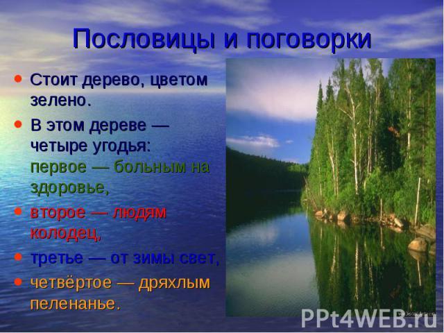 Пословицы и поговорки Стоит дерево, цветом зелено. В этом дереве— четыре угодья: первое— больным на здоровье, второе— людям колодец, третье— от зимы свет, четвёртое— дряхлым пеленанье.