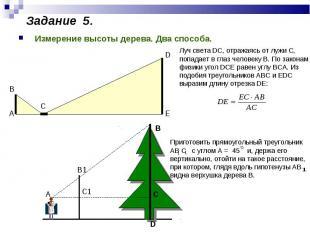 Измерение высоты дерева. Два способа.