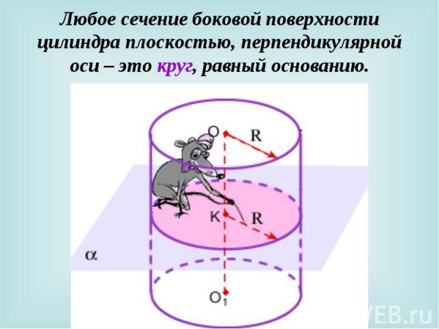 Любое сечение боковой поверхности цилиндра плоскостью, перпендикулярной оси – это круг, равный основанию.
