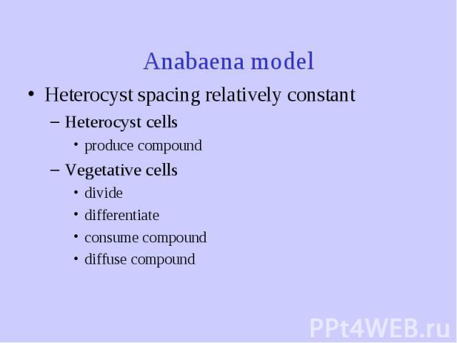 Anabaena model