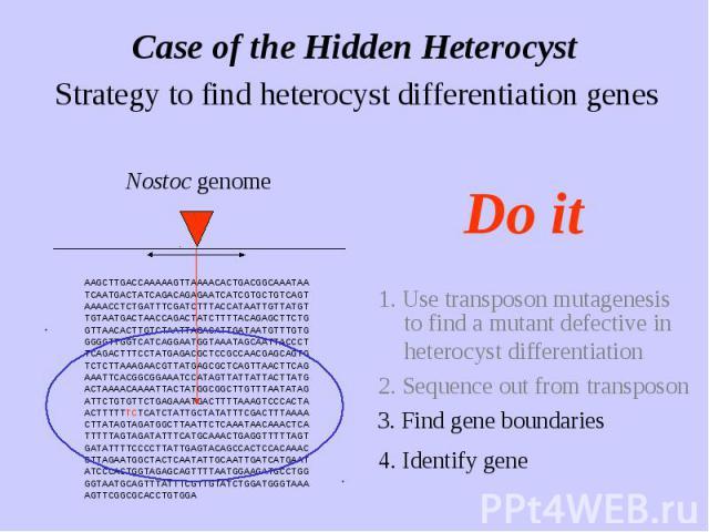 Case of the Hidden Heterocyst