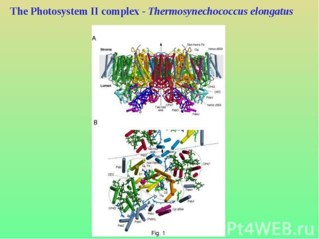 The Photosystem II complex - Thermosynechococcus elongatus