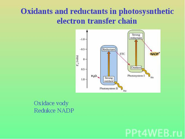 Oxidants and reductants in photosysnthetic electron transfer chain