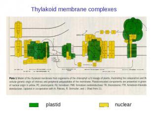 Thylakoid membrane complexes