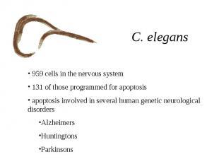 C. elegans