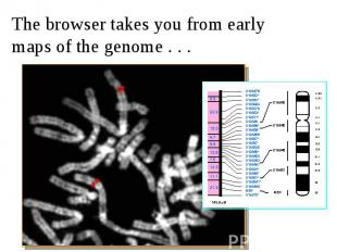 The browser takes you from early maps of the genome . . .