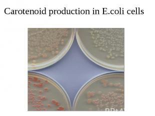 Carotenoid production in E.coli cells