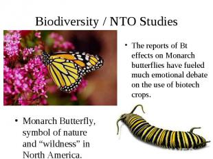 "Biodiversity / NTO Studies Monarch Butterfly, symbol of nature and ""wildness"" in"