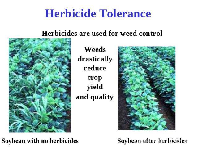 Herbicide Tolerance