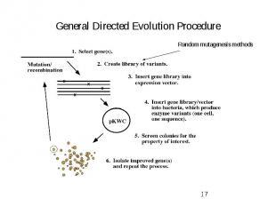 General Directed Evolution Procedure